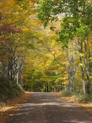 Autumn_Country_Road_5